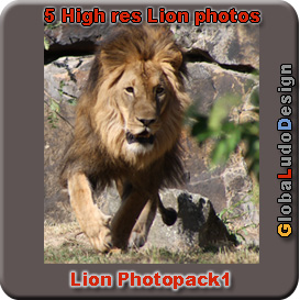 lion photopack1