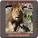 Lion Photopack1 | Photos and Images | Animals