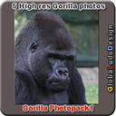 Gorilla Photopack1 | Photos and Images | Animals