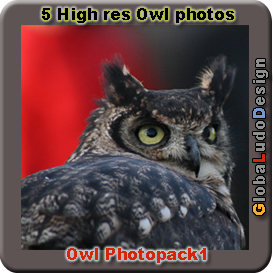 Owl Photopack1 | Photos and Images | Animals