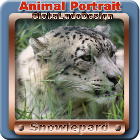 Snowlepard Portrait1 | Photos and Images | Animals