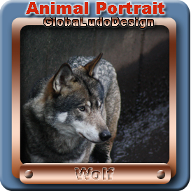 Wolf Portrait1 | Photos and Images | Animals