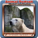 Polar Bear Portrait1 | Photos and Images | Animals