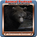 Brown Bear portrait1 | Photos and Images | Animals