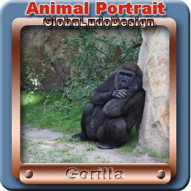 Gorilla Portrait1 | Photos and Images | Animals