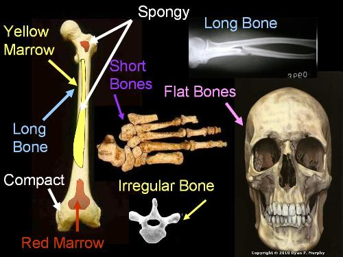 First Additional product image for - Human Body Systems and Health Topics Unit