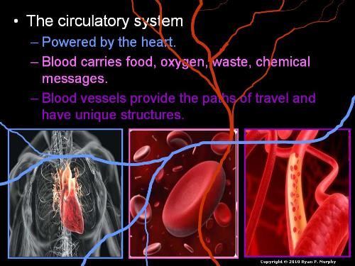 Third Additional product image for - Human Body Systems and Health Topics Unit