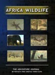 stock footage collection african wildlife