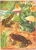 Frogs Print from 1906 Child's Animal Book | Photos and Images | Animals