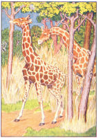 Giraffe Print from 1906 Child's Animal Book | Photos and Images | Animals