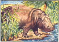 Hippo Print from 1906 Child's Animal Book | Photos and Images | Animals