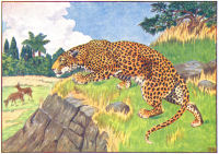 leopard print from 1906 child's animal book