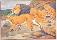 Lions Print from 1906 Child's Animal Book | Photos and Images | Animals
