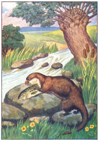 Otter Print from 1906 Child's Animal Book | Photos and Images | Animals