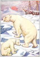 Polar Bear Print from 1906 Child's Animal Book | Photos and Images | Animals