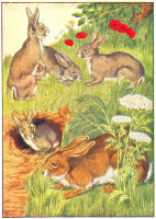 Rabbit Print from 1906 Child's Animal Book | Photos and Images | Animals