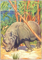 Rhino Print from 1906 Child's Animal Book | Photos and Images | Animals