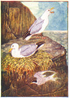 Seagull Print from 1906 Child's Animal Book | Photos and Images | Animals