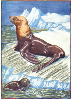 Seals Print from 1906 Child's Animal Book | Photos and Images | Animals