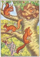 Squirel Print from 1906 Child's Animal Book | Photos and Images | Animals