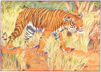 Tiger Print from 1906 Child's Animal Book | Photos and Images | Animals