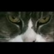 Cat Eyes HD Video Visual