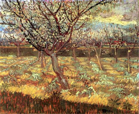 Image Photo Apricot Trees in Blossom2 Van Gogh | Photos and Images | Vintage