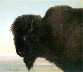 Image Photo Buffalo Head Bierstadt | Photos and Images | Vintage