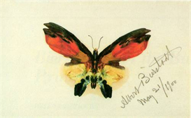 Image Photo Butterfly 2 Bierstadt | Photos and Images | Vintage