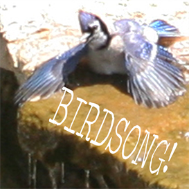 Download the Ambient Music | Birdsong Soundscape