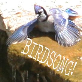 birdsong soundscape