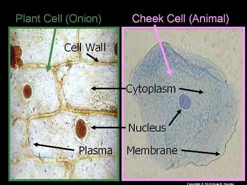 Second Additional product image for - Cellular Biology Unit