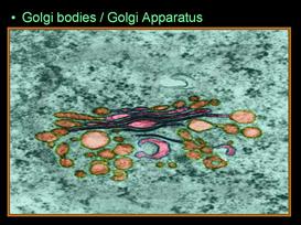 Cellular Biology Unit | Other Files | Presentations