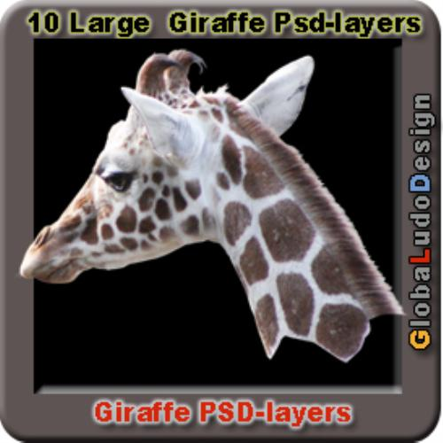 First Additional product image for - 10 Giraffes Photo Psd layers
