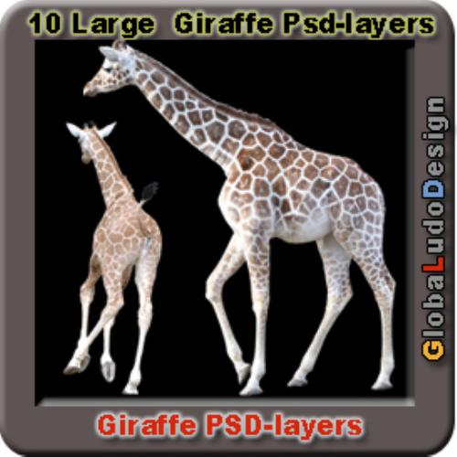 Second Additional product image for - 10 Giraffes Photo Psd layers