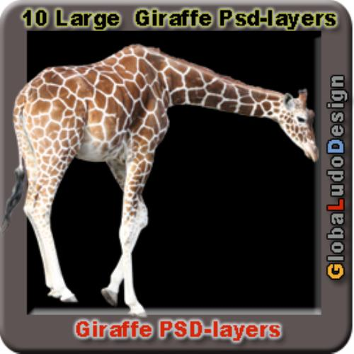 Third Additional product image for - 10 Giraffes Photo Psd layers