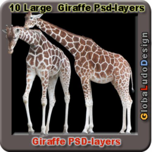 Fourth Additional product image for - 10 Giraffes Photo Psd layers