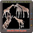 10 Giraffes Photo Psd layers | Photos and Images | Animals