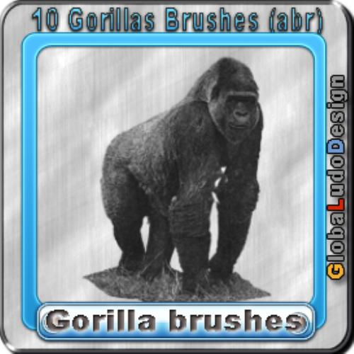 Third Additional product image for - 10 Gorillas Brushes