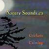Crickets Calming Sleep | Music | New Age
