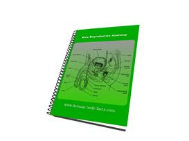 Male Reproductive Anatomy | eBooks | Science