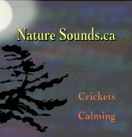 Crickets Calming Full Length Download | Music | New Age