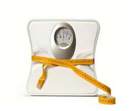 Weight Loss PLR Articles | Documents and Forms | Business