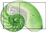 fib plot indicator