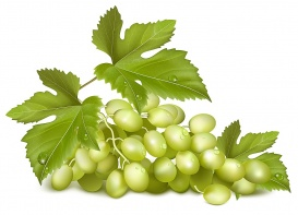 vectorlib rf (standard license): vector illustration. sunny grape. green grapes with leaves.