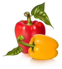vectorlib rf (standard license): vector illustration of peppers with leaves.
