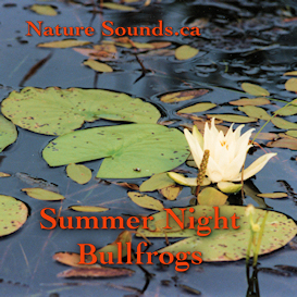Summer Night Bullfrogs | Music | Ambient