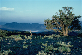Evening Vista Hi-Res Image | Photos and Images | Nature
