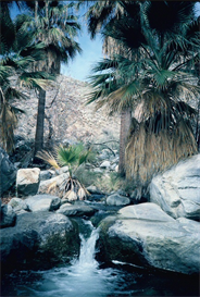 Palm Canyon Hi-Res Image | Photos and Images | Nature