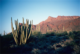 Ajo Mountains Hi-Res Image | Photos and Images | Nature